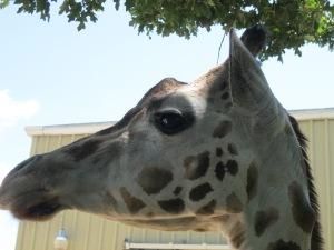 zoo 050