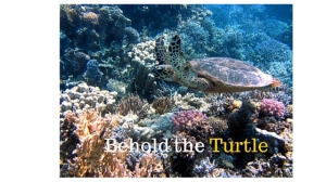 Behold the Turtle
